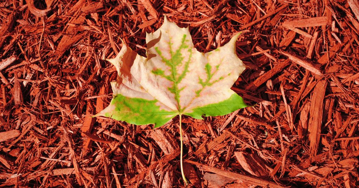 autumn-in-new-york-fb