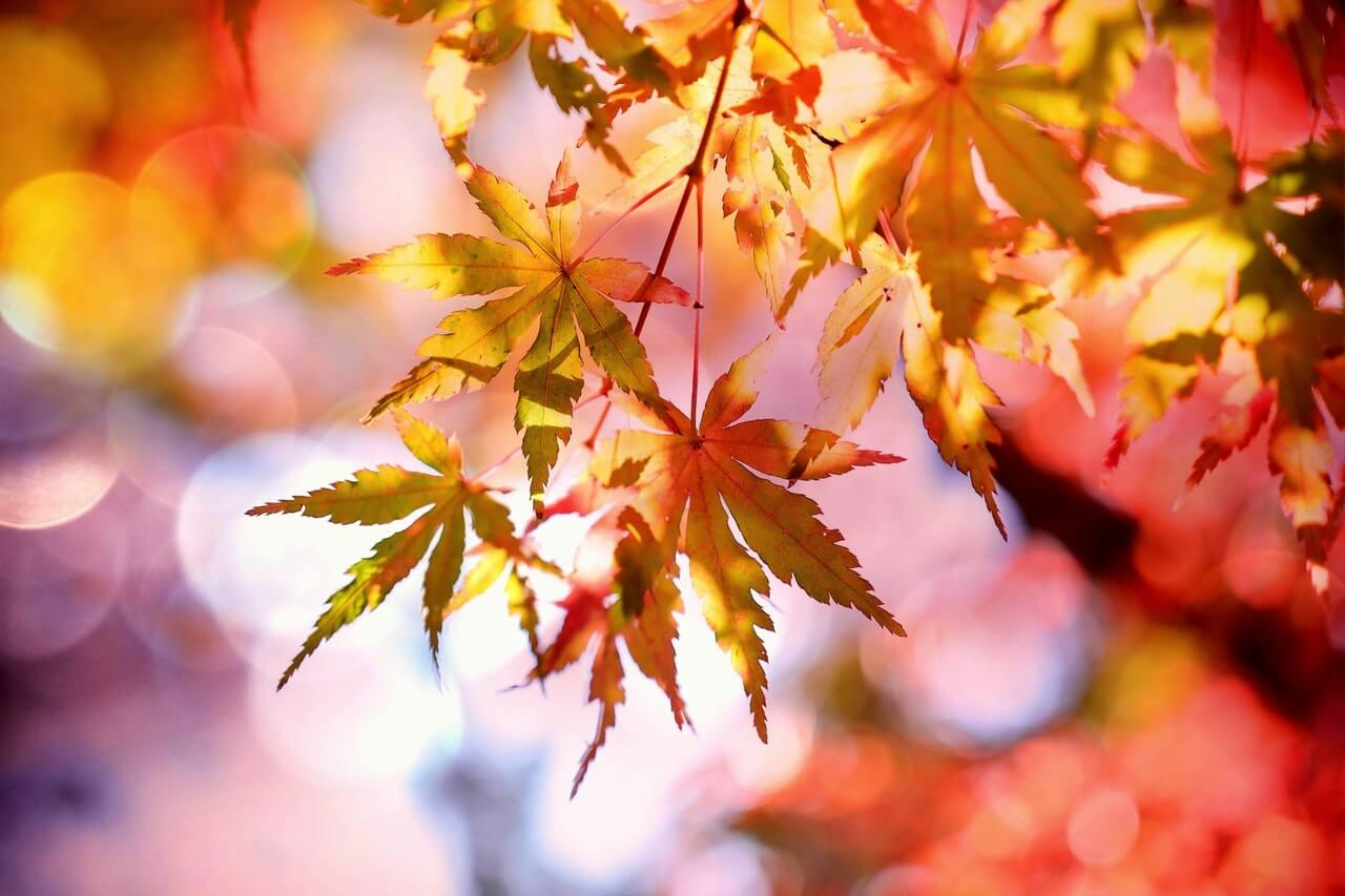fall hidden costs of moving